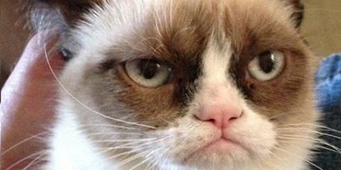 Grumpy_Cat_37810