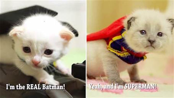 Too Cute – If Batman and Superman were Kittens